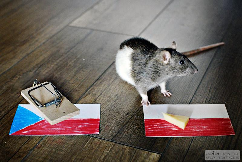 przewidywanie przyszłości wspomagane szczurem